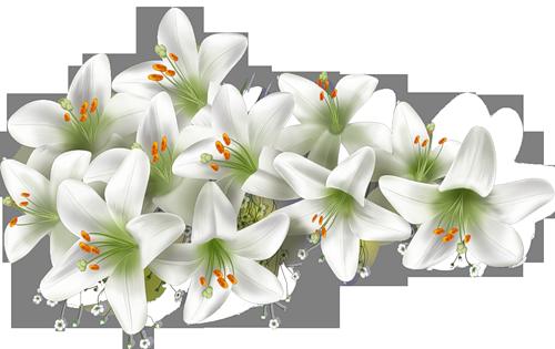 http://chrysantemum.ucoz.ru/kartinki/0_6ce84_13b24ab0_L.jpg.png